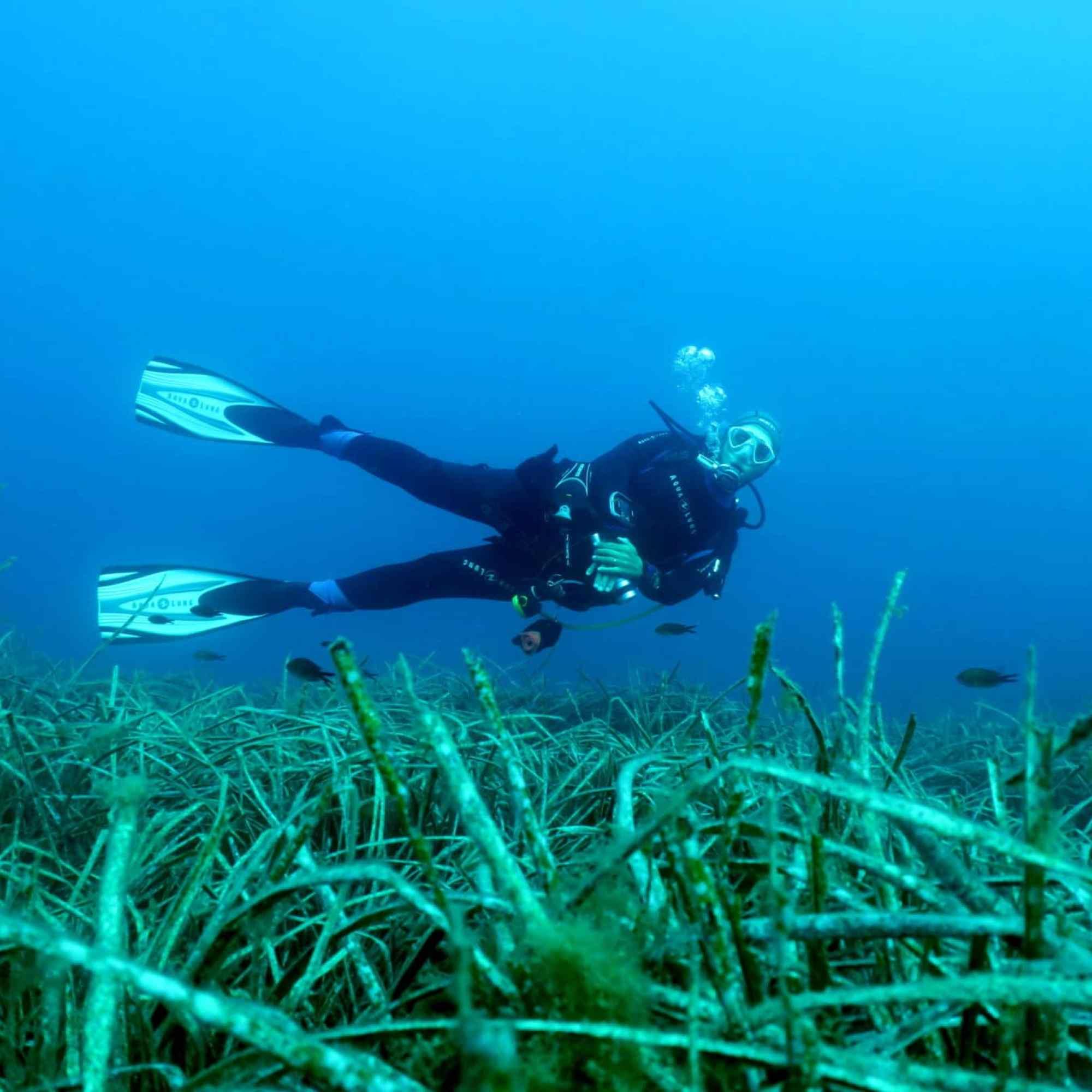 Diving La Lauve Golfe-Juan Antibes