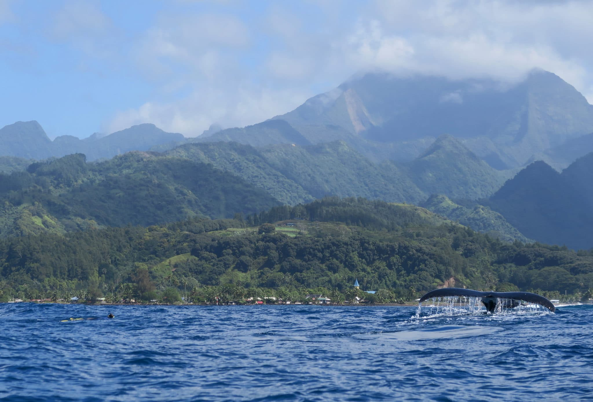 whale watching Tahiti Peninsula