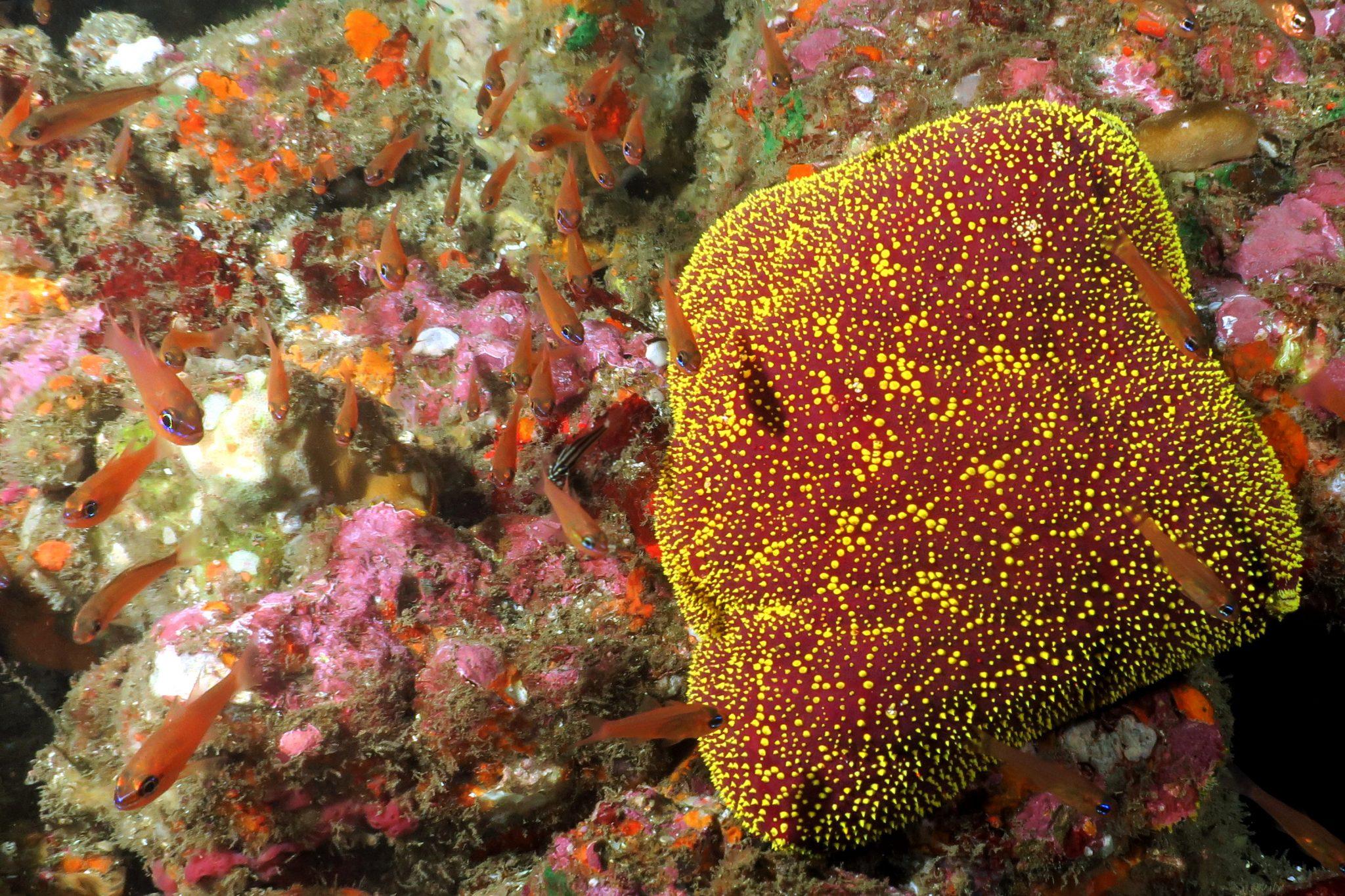 scuba diving Hiva Oa Marquesas Islands