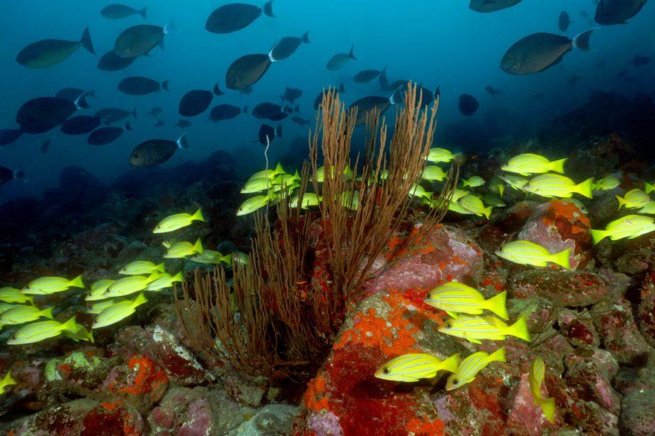 Scuba diving Hiva Oa Marquesas ISlands French Polynesia