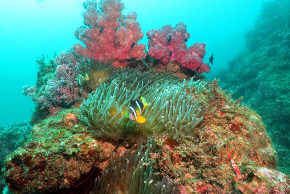 Atagawa - plongée péninsule d'Izu - Japon