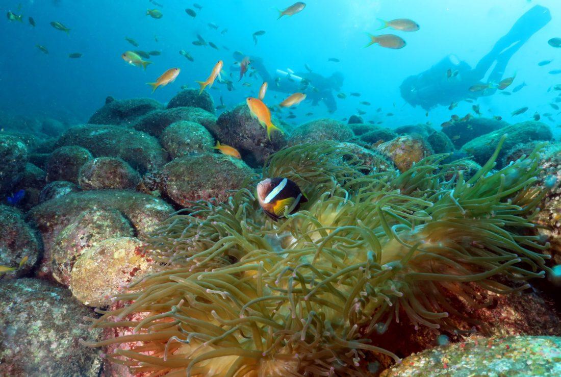 plongée Péninsule d'Izu Japon