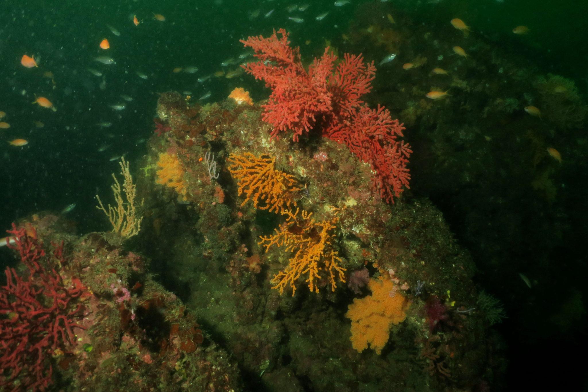 Diving Atami IzuPeninsula Japan