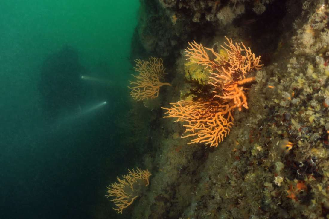 scuba diving Gulf Morbihan Brittany France