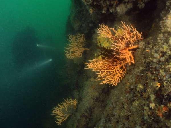 scuba diving Gulf Morbihan Brittany France