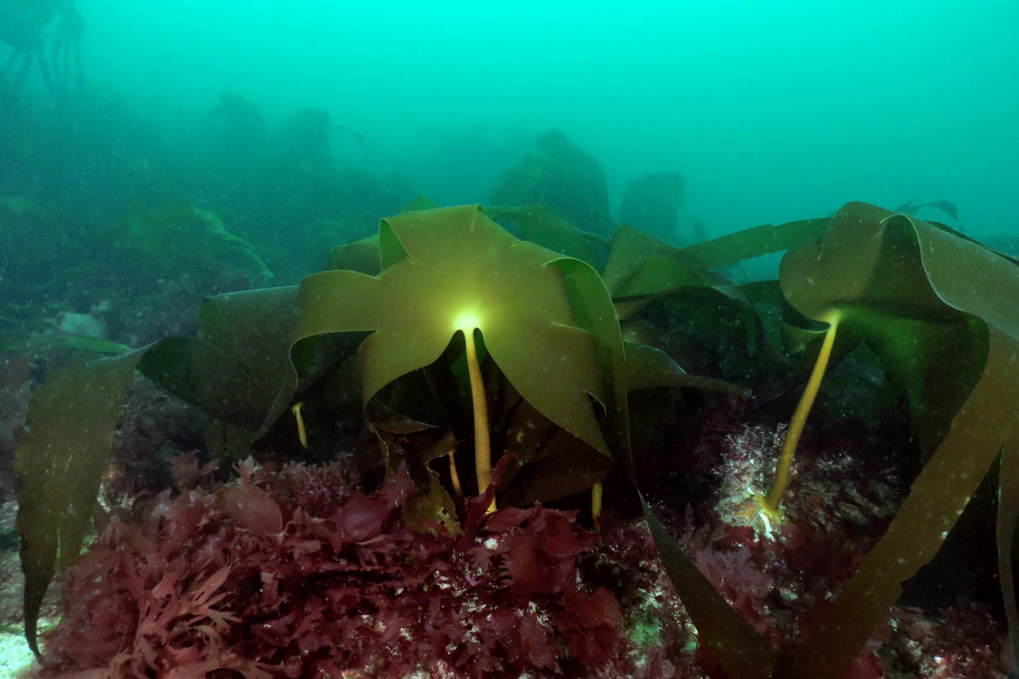 Diving Saint-Pabu
