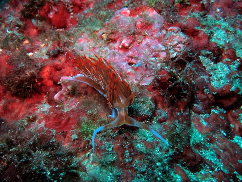 Nudibranch Cadaques