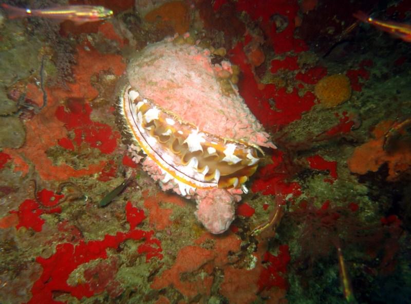 Wall diving Kalanggaman Leyte Philippines