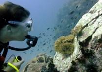 Scuba diver Anemone Fish scuba diving SouthWest Pinnacle Koh Tao Thailand
