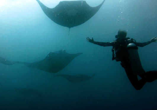 Scuba diving Manta Point Nusa Penida Bali Indonesia