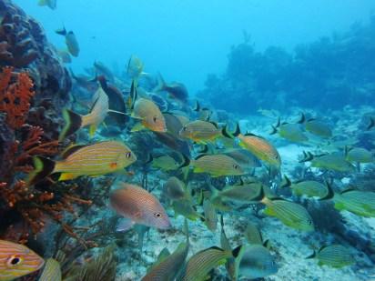 Scuba diving Key Largo Florida USA