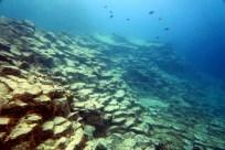 Basalt Columns Scuba diving Tenerife Canary Islands