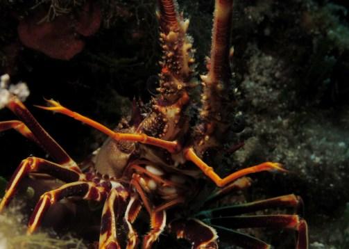 Scuba diving Hvar Croatia