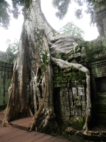 The jungle is trying to take over Ta Prohm