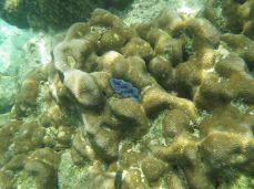 Bright colorful clam