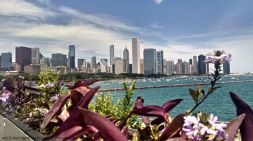 The view of Chicago from Shedd Aquarium's Lakefront Terrace.