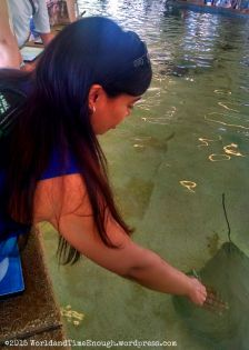 Pritee touches a stingray for the first time at Shedd Aquarium's summer exhibit.