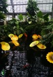Chihuly installation inside Garfield Park Conservatory