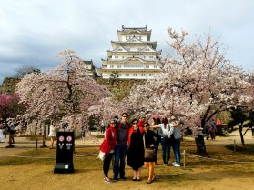 Group photo by the cherry blossoms.
