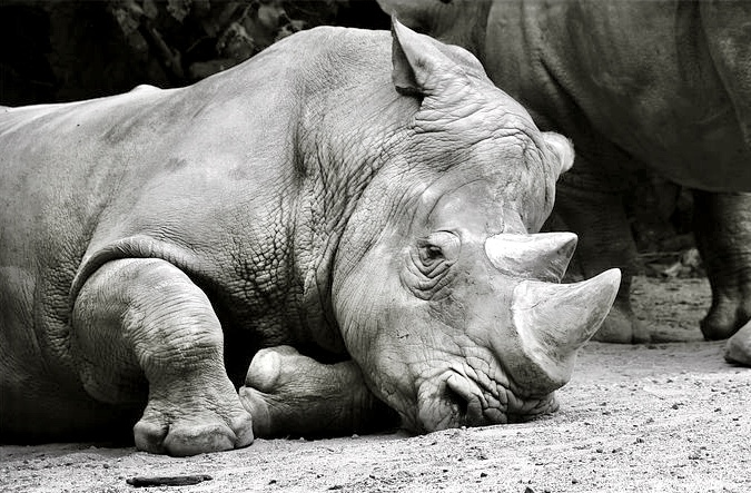 Breaking! 4 Suspected Rhino Poachers Arrested In Kruger National Park; A Total Of 11 Alleged Poachers Have Been Captured This Year