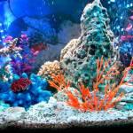 поддержание жизни в аквариуме