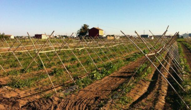 зеленчуковите градини край Валенсия