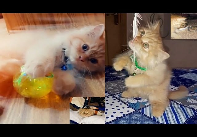 Cute Animal Videos World Cat Comedy