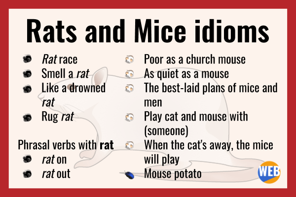 rats and mice idioms