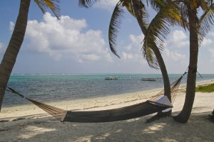 Hammock swinging between palm tress on Cayman Island