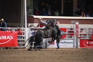 Bronco riding at Calgary Stampede. Photo by Tonya Fitzpatrick