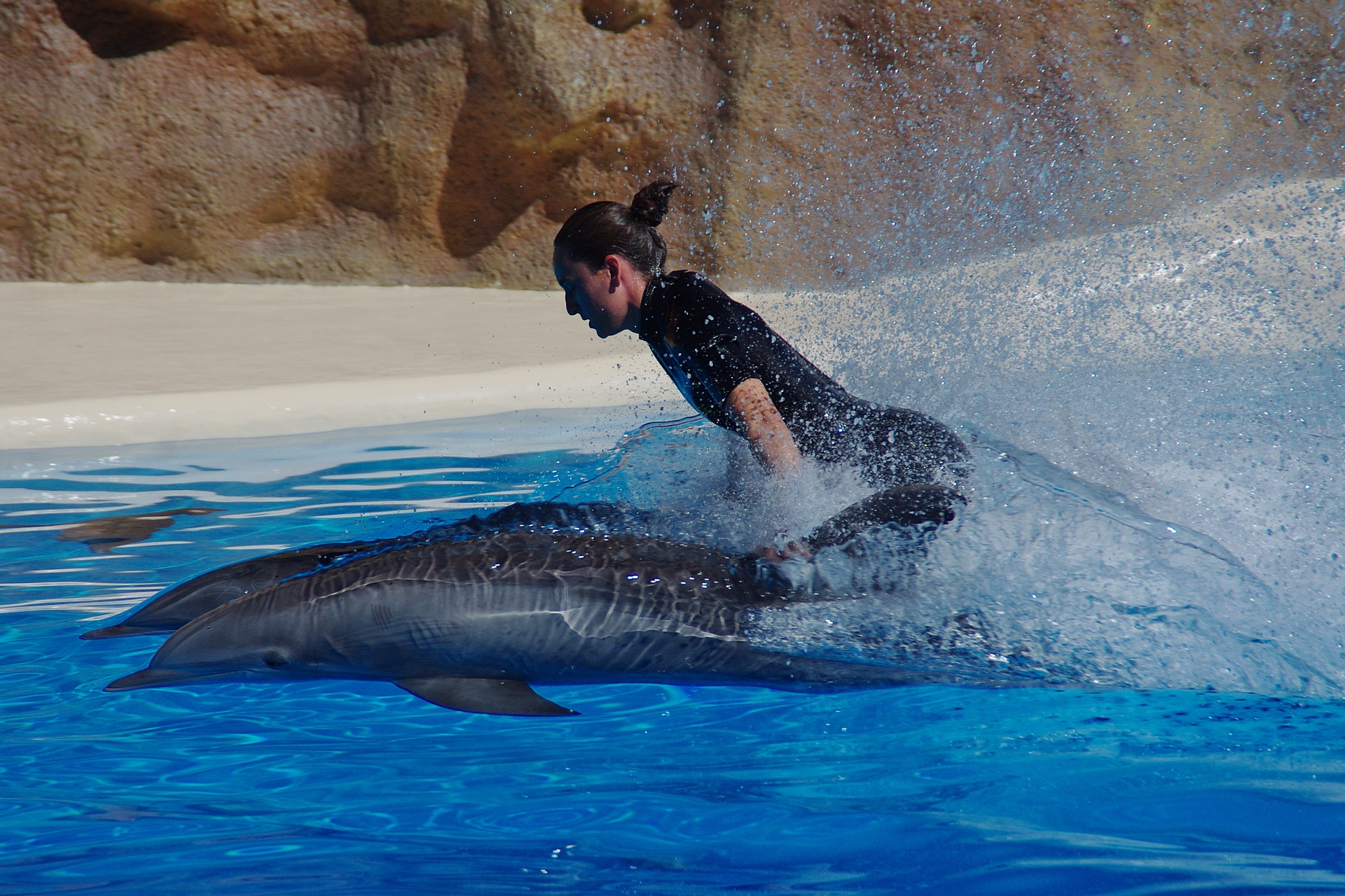 Swimming with dolphins in captivity