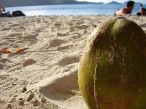 Coconut on a Sint Maarten (Saint Martin0 beach.