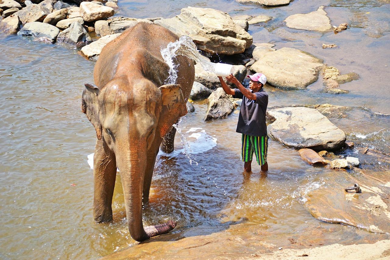 elephant-being washed