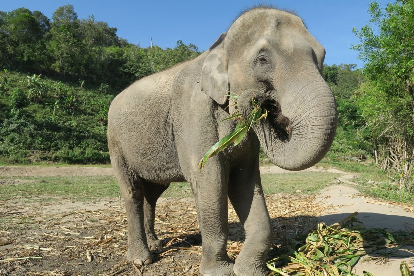 elephant-sanctuary Thailand