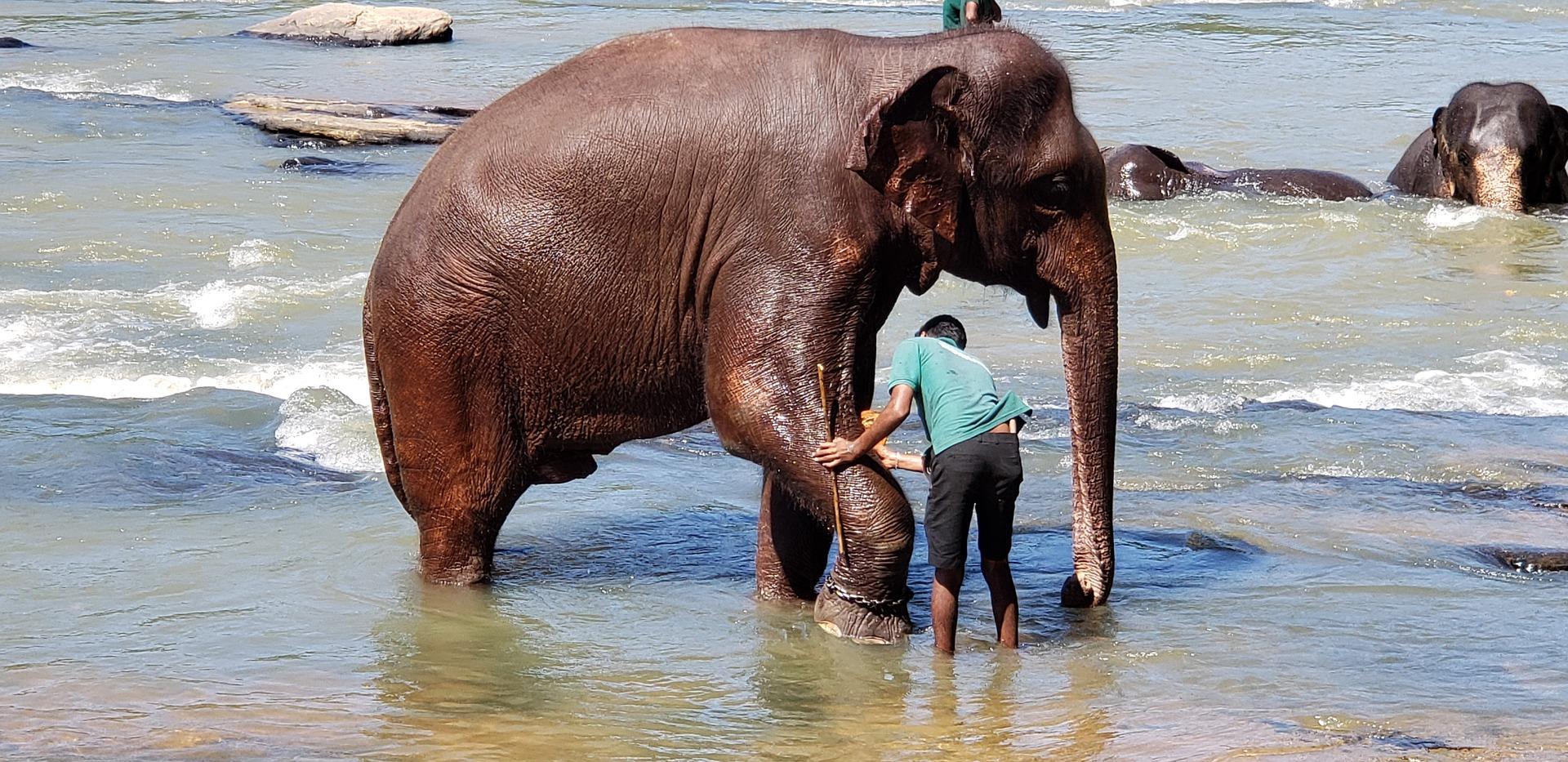 elephants-bathing