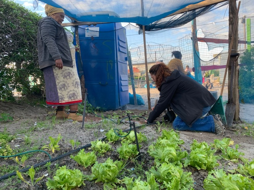 in the Khayelitsha township in Cape Town where I planted spinach for one of the tenants.