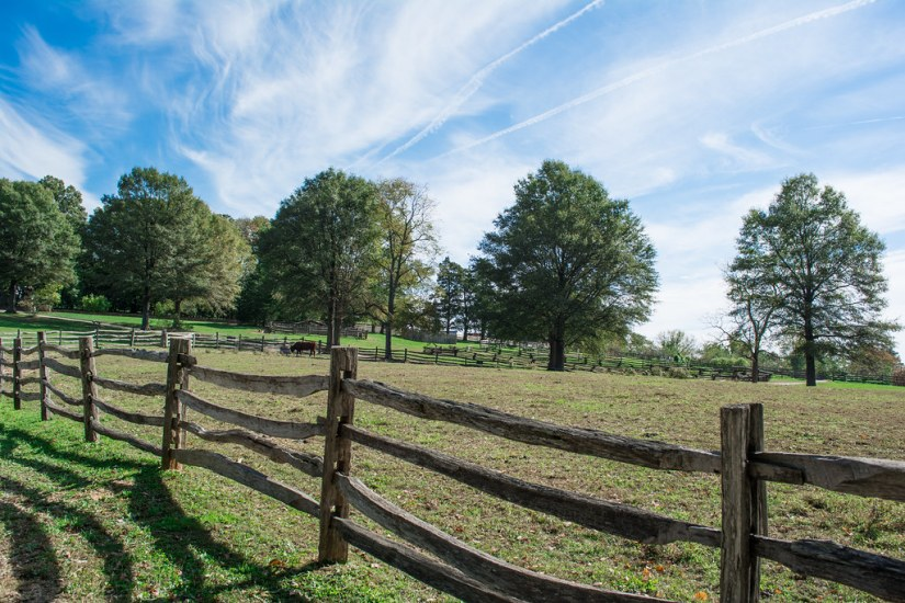 """cow pasture - Mt Vernon - 2014-10-20"" by Tim Evanson is licensed under CC BY-SA 2.0"