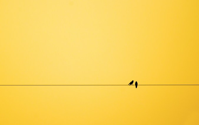 minimalism-birds-background