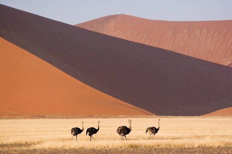 Flora Dan Fauna Namibia Geografi Namibia Bantuan Iklim Sumber Air Flora Dan Fauna