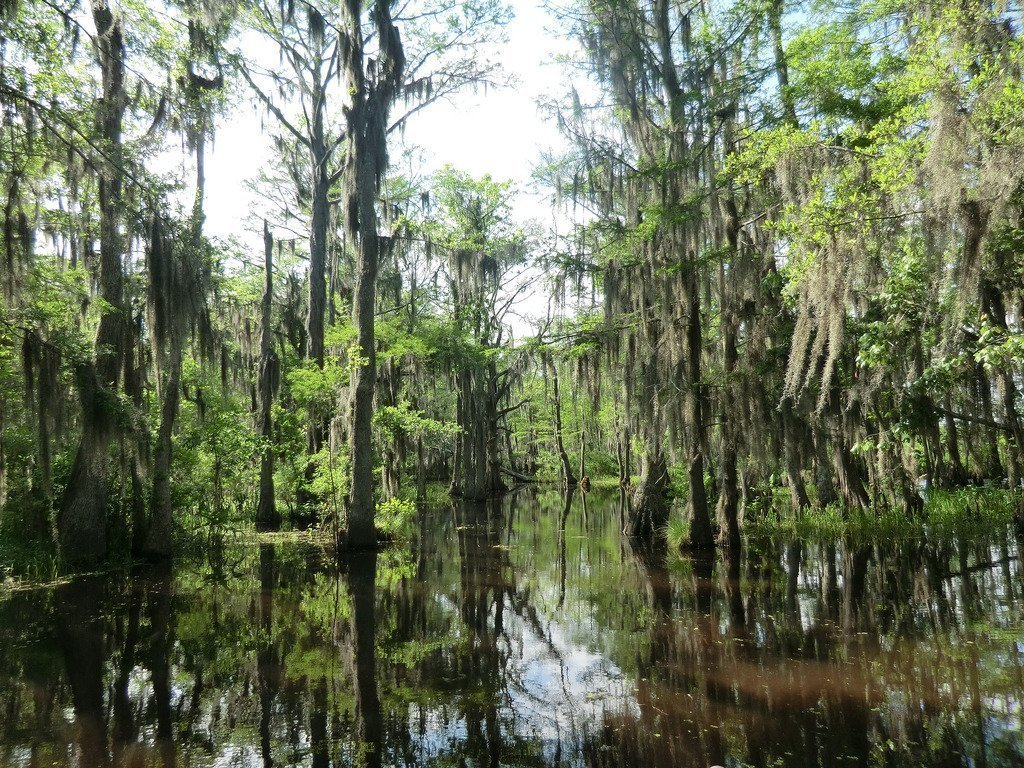 New Orleans Swamp Tour Review