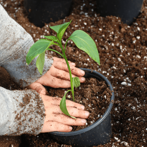 Gardening with Kids – 6 Veggies Kids Can Easily Grow