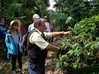 Gary, our guide, picking coffee