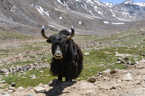 2014-07-25 12-37-03 Nubra Valley