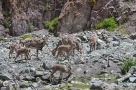 2014-08-04 11-42-10 Ladakh Stok Kangri 6000m