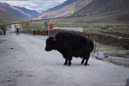2014-08-08 17-53-17 Ladakh Zanskar Karsha