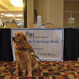 WID's favorite service dog stands in front of a desk