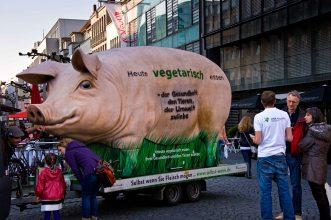 Vegetarian Pig