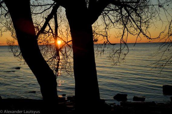 Солнце в ветвях