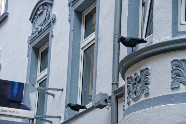 Crow Guards