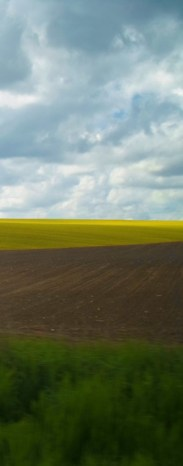 yellow+fields